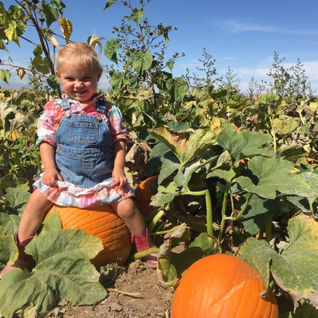 Benefits of Pumpkin
