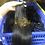 Thumbnail: 3 cabelos saia venda a grosso