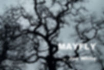 Mayfly Image.jpeg