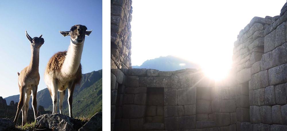 Machu Picchu Peru Lama - The Chunk List