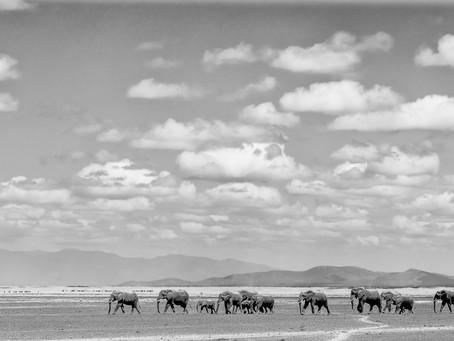 Back from Amboseli NP and Maasai Mara, Kenya