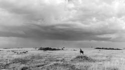 Maasai Mara 2015