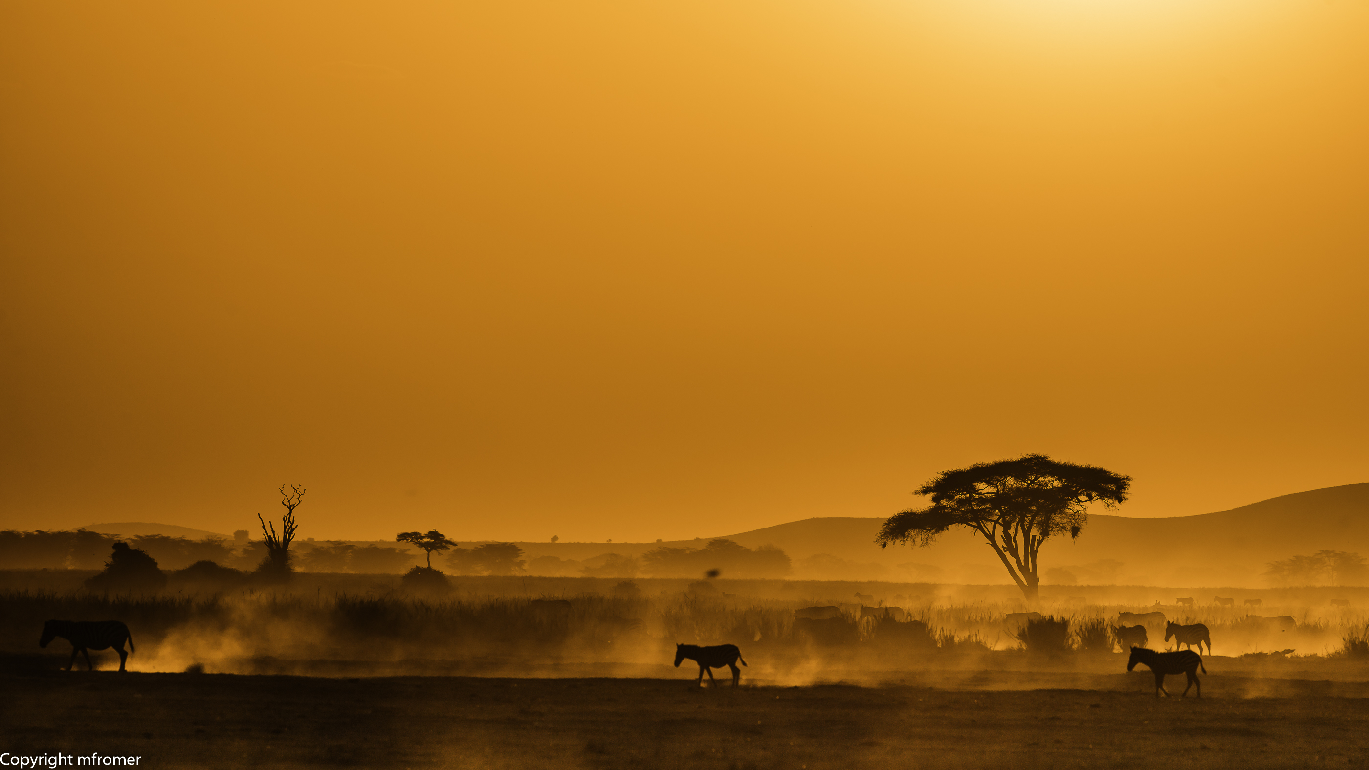 Amboseli NP