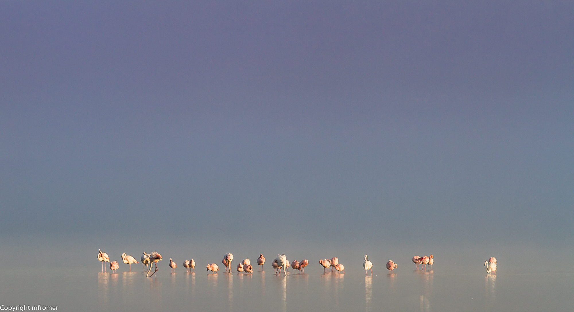 flamingo lake nakuru