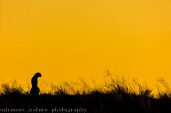 Cheetah mother Tsvalu Game parc