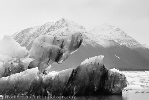 Floating Ice Svalbard 2018