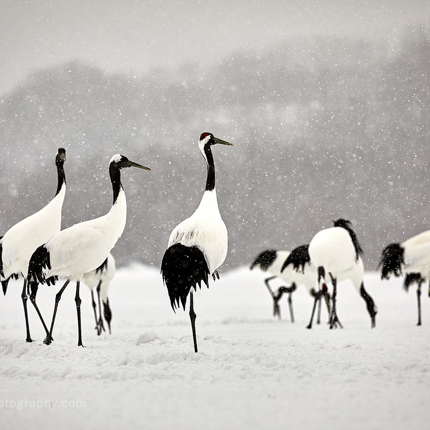 A group of cranes.