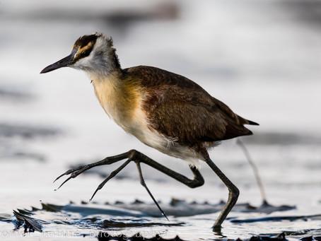 Chobe river for bird photography