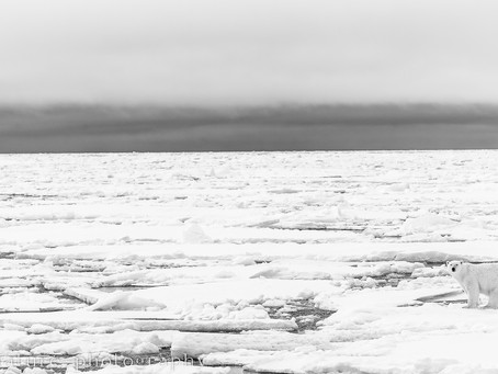 Svalbard-a unique photographic experience