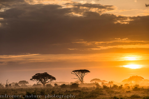 Amboseli NP, Kenya 2016