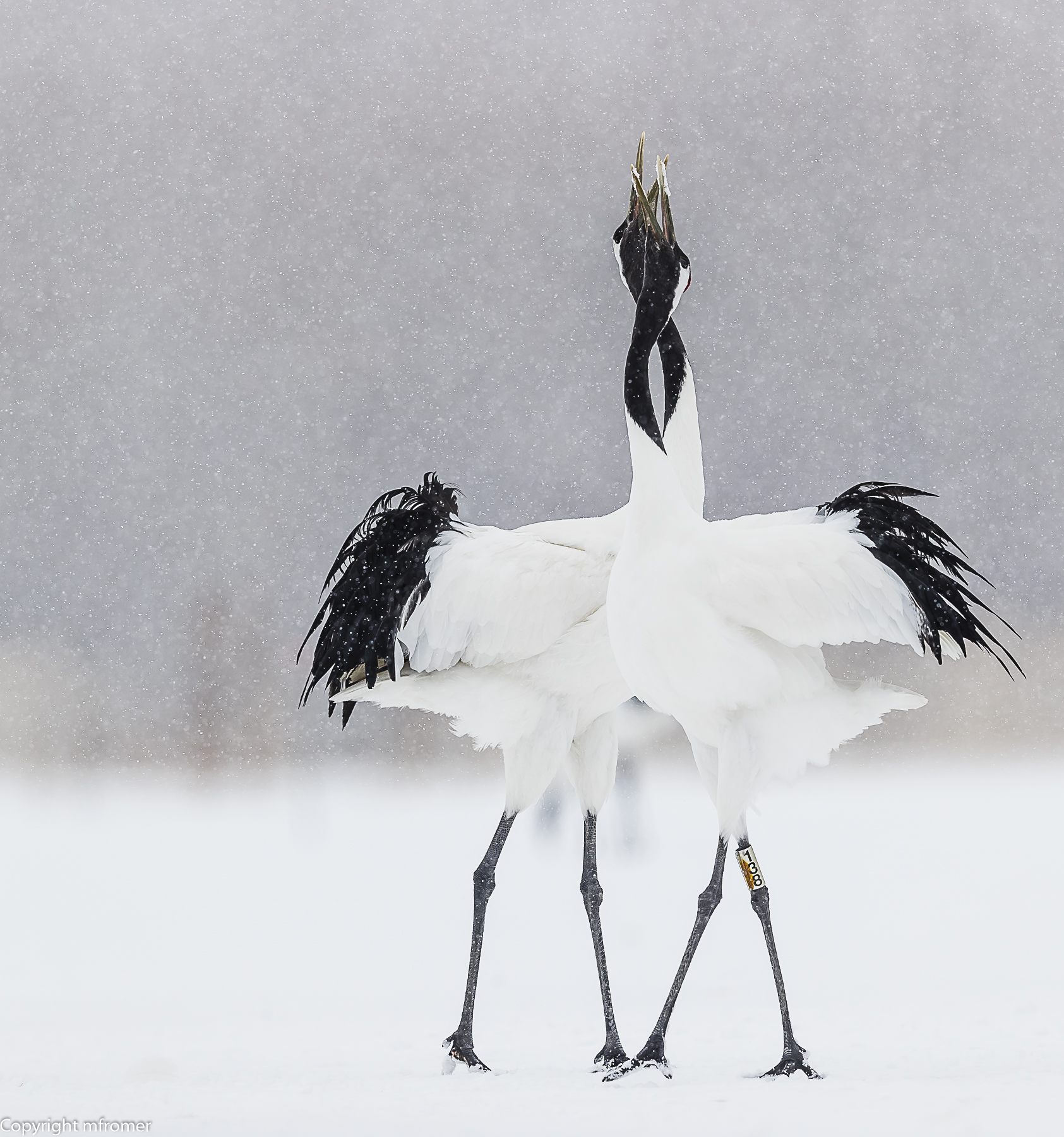 Cranes in trance