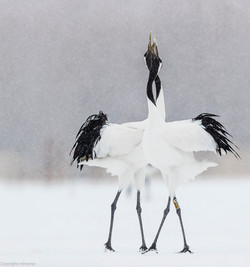 Cranes in trance