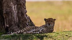 Maasai Mara 2014