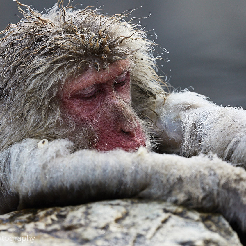 snoozing in hot pool