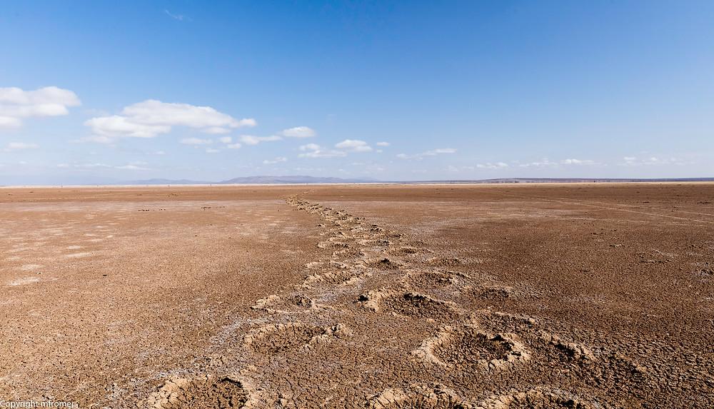 Elephant tracs, Amboseli NP