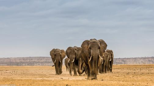 Amboseli NP, 2018