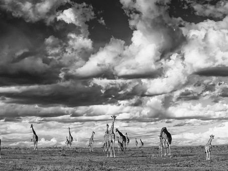 Africa Geographic Photographer of the Year Competition 2017