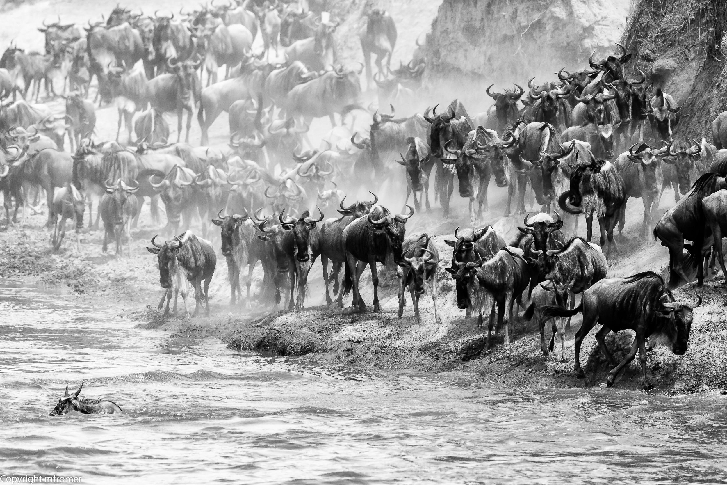 Mara river 2014