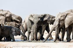 elephants enjoying a waterhole