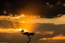 Maasai Mara 2016