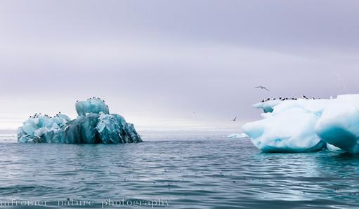 In the arctic ocean 2018