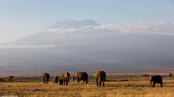 In front of Kilimandjaro