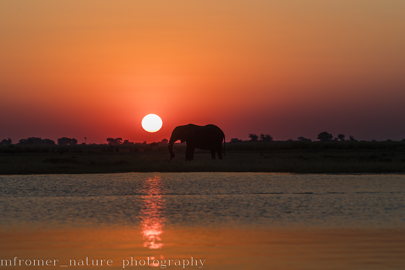 Elephant at sunset Chobe river