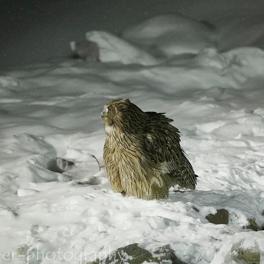 fishing owl 2