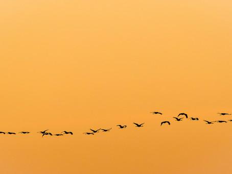 European Crane Photography in Spain