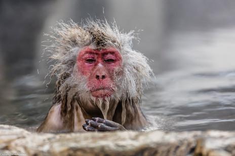 old snow monkey 2017