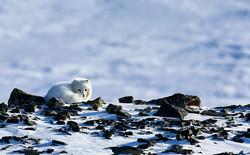 Svalbard 2019 1