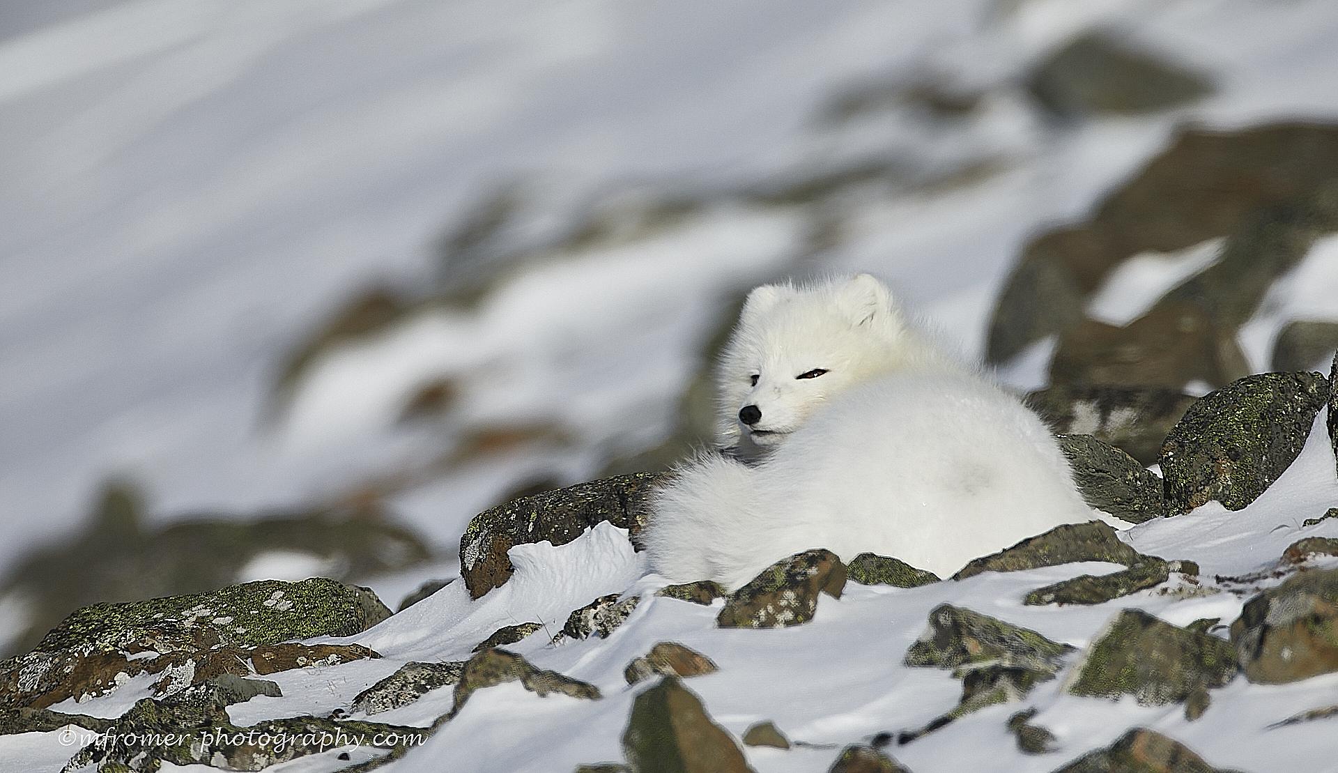 Svalbard 2019 4