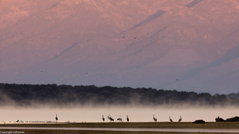 European cranes, picture taken fro a extremely small hide, freezing cold, Spain