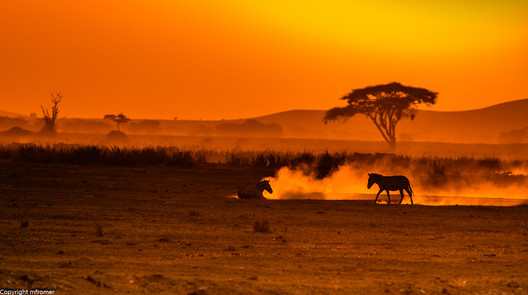 sunset and zebras in the dust