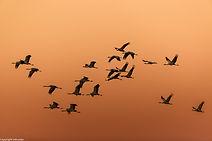 cranes in spain-3.jpg