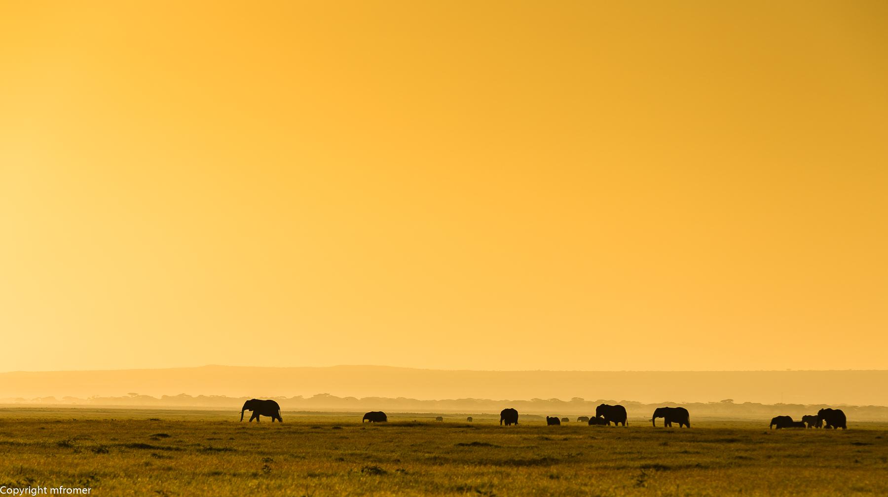 elephants Amboseli NP