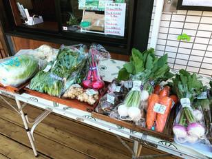 横浜野菜の店頭販売、好評につき