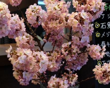 桜が咲いてますw