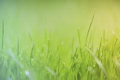 Grass(gradient).jpg