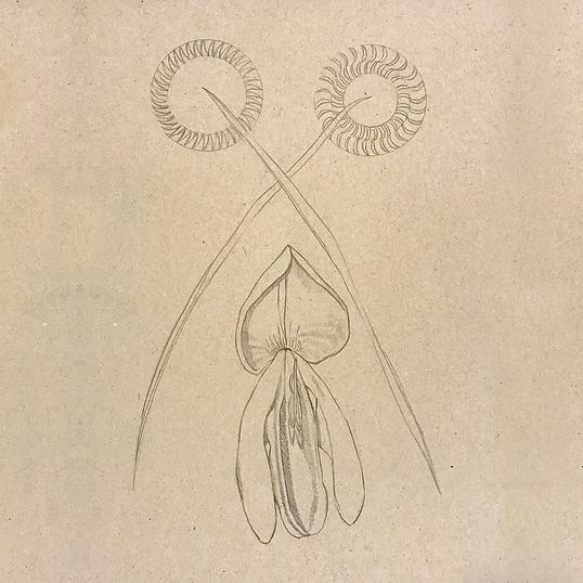 Tegning af en gyvel.png