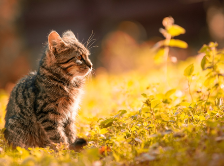 Poisonous Plants that Cat Owners Should Avoid