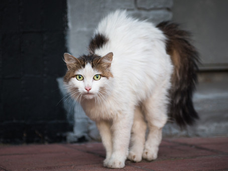 From Feral to Friendly – How to Help Your Cat Feel at Home