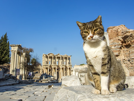 Felis Catus – A History of the Domestic Cat