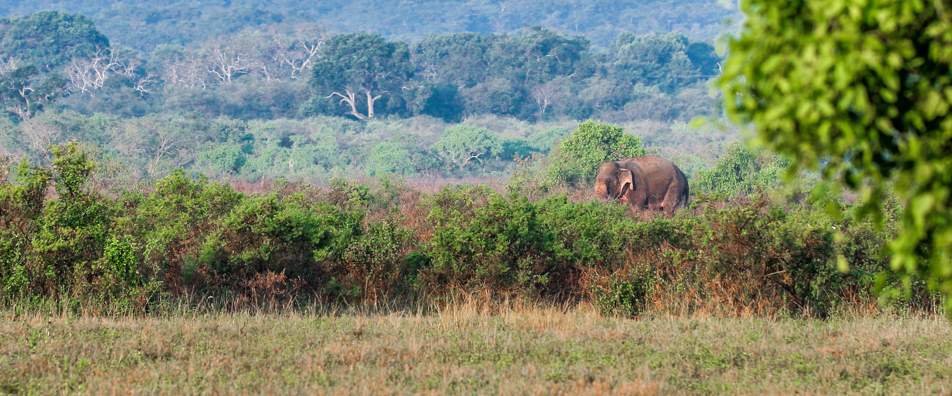 Elephant at Illiya