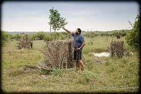 20180131-Tree cages-0783-2.jpg