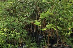 Nurseary plants