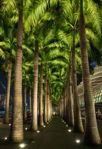 Palms @ Marina Bay