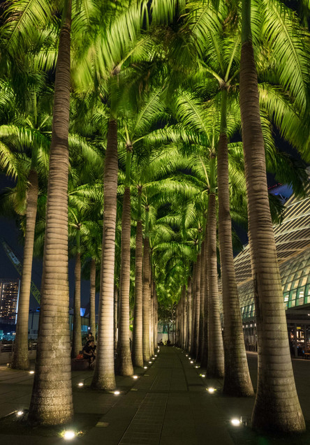 Palms @ Marina Bay