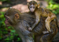 Mama & Baby monkey