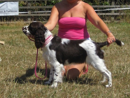 Bring your pooch to our Fun Dog Show on 23 June